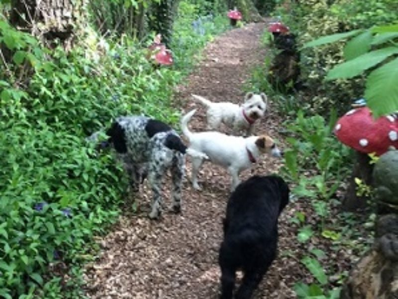 We welcome your canine chums and have direct access to wonderful dog walking. We have dogs of our own so we understand the importance of your doggie family members – but you will need to talk to us before you book .